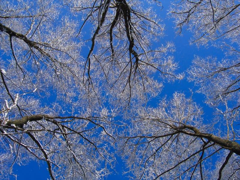 天空冬天 免版税库存图片