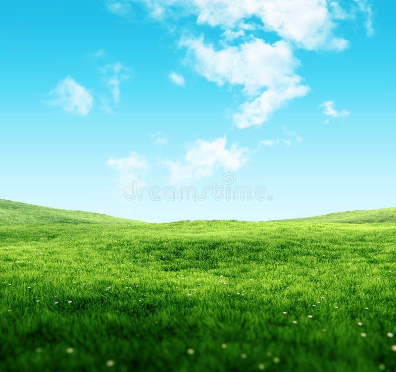 天空和草背景 库存照片