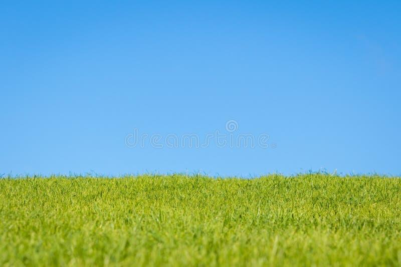 天空和草 免版税库存照片