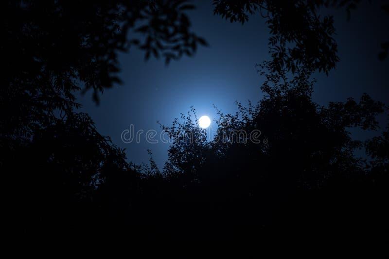 天空和超级月亮夜风景与明亮的月光在树枝后剪影  平静自然背景 户外 免版税库存照片