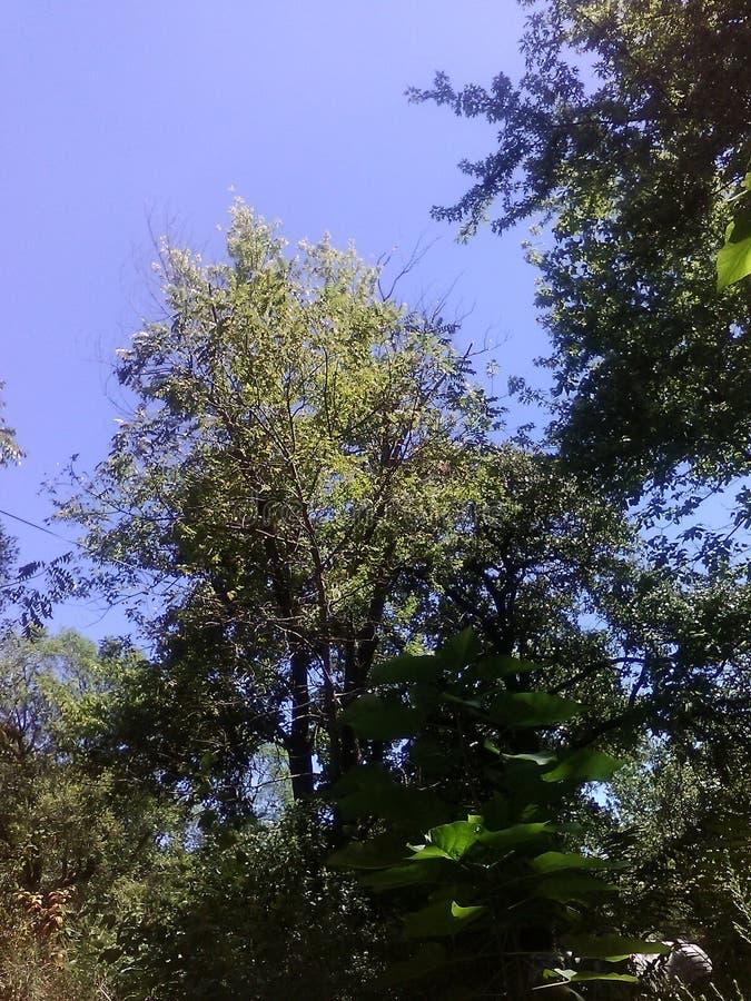 天空和结构树 免版税图库摄影