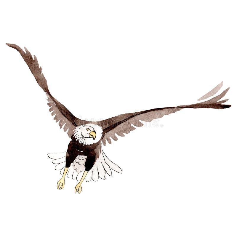 天空在水彩样式被隔绝的野生生物的鸟老鹰 背景,纹理,样式,框架 皇族释放例证