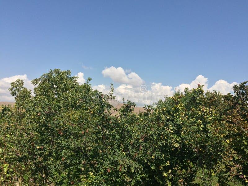 天空在阿勒山 库存图片