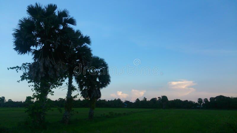 天空微明和绿色领域 库存照片