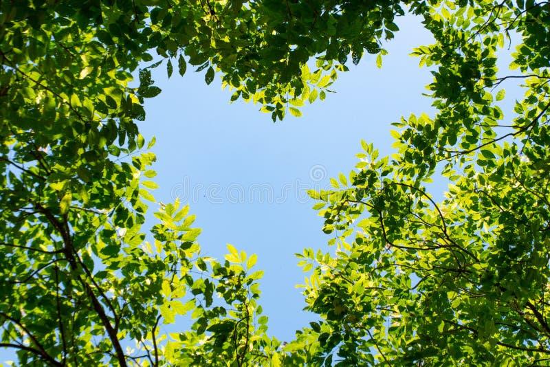 天空是在树之间的心脏 库存照片