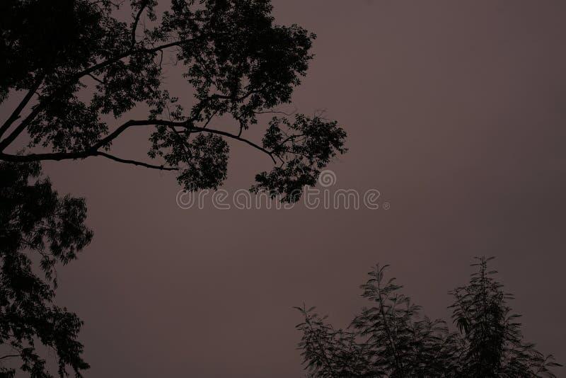 天空晚上 免版税图库摄影
