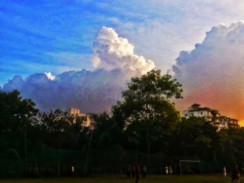 天空树和太阳的惊人的图片 免版税库存图片