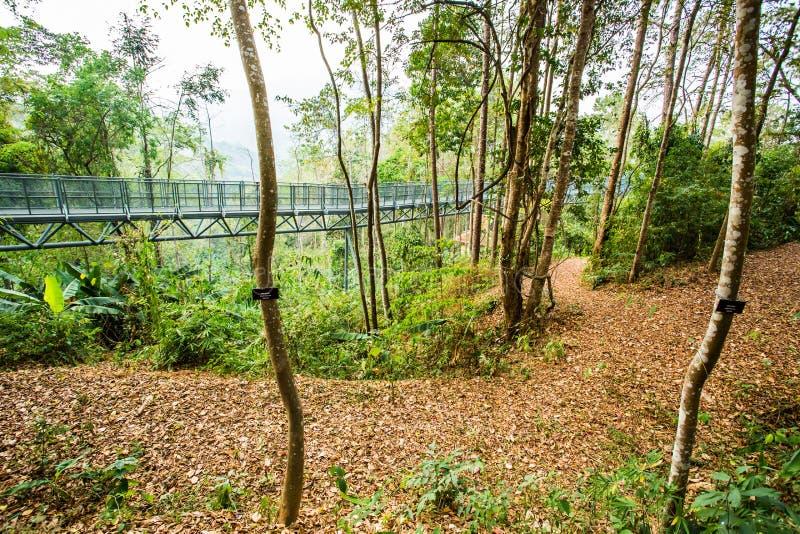 天空步行在森林, chiangmai泰国里 库存照片