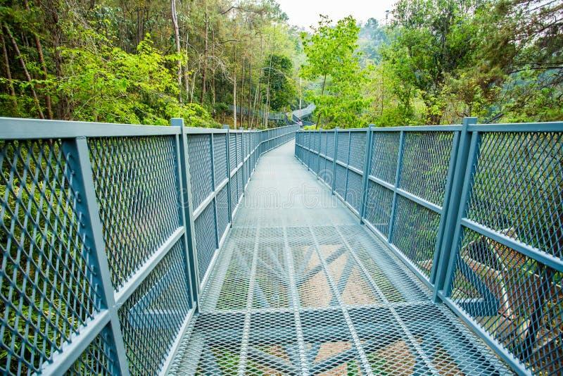 天空步行在森林, chiangmai泰国里 免版税库存图片