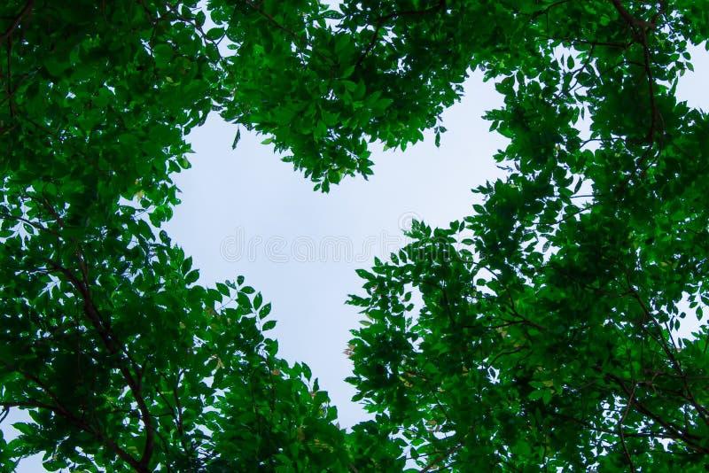 天空的本质和树是美好,与tre 库存图片