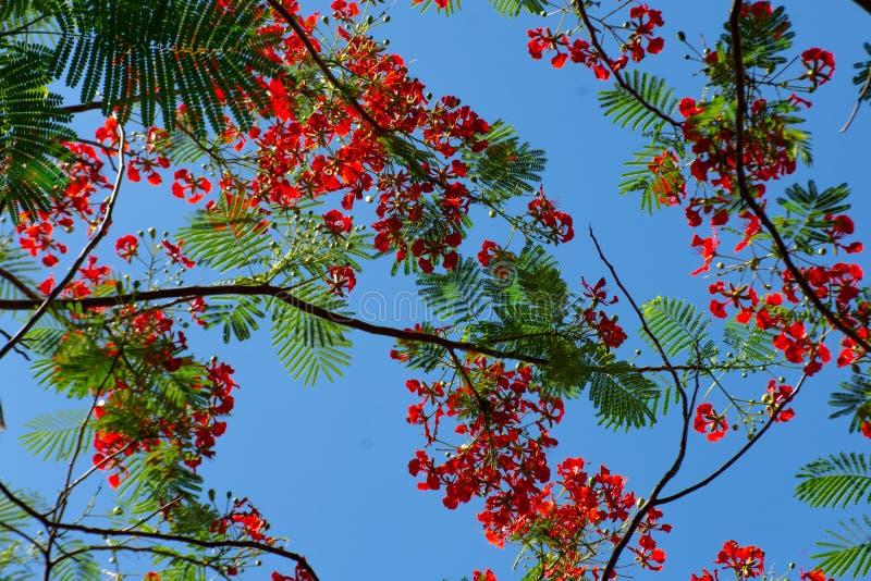 天空的本质和树美好 图库摄影