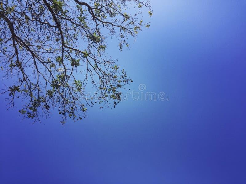 天空的树 免版税库存图片