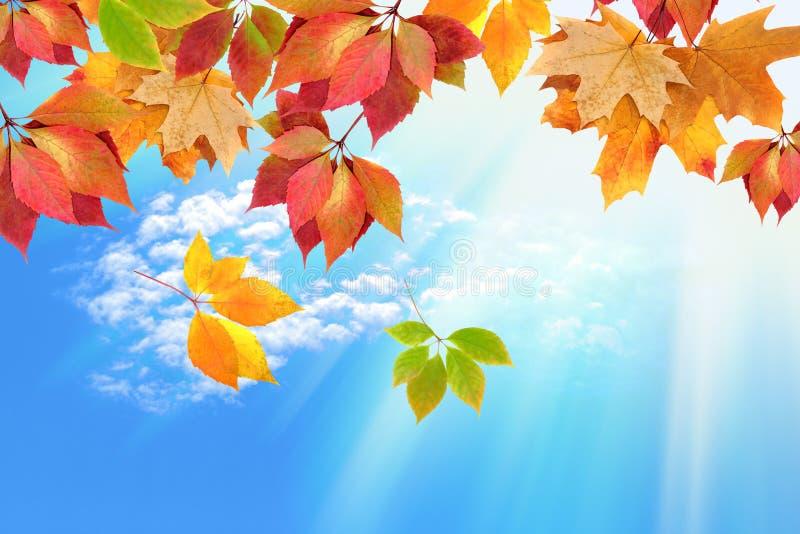 天空的秋叶 免版税图库摄影