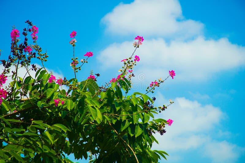 天空的花 库存图片