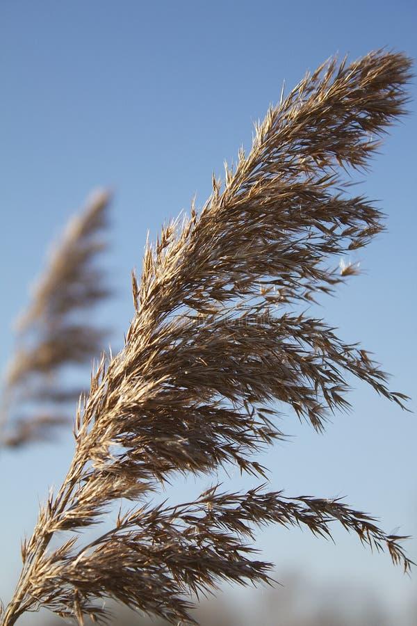 天空的草 库存照片