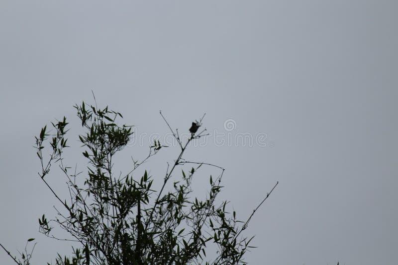 天空竹叶子自然秀丽背景野生生物分支鸟 库存图片