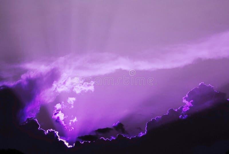 天空紫罗兰 免版税库存照片