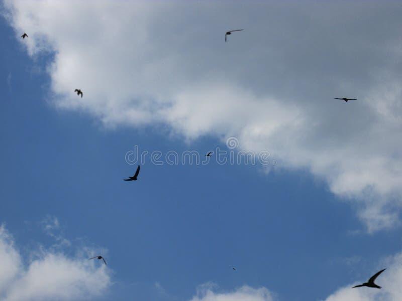 天空背景和飞鸟 库存照片