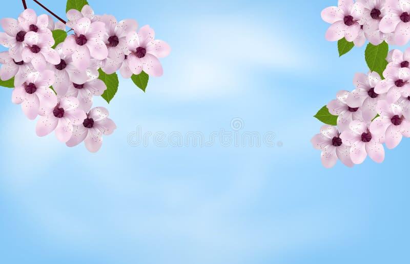 天空背景用开花樱桃或佐仓 下雨 向量 皇族释放例证