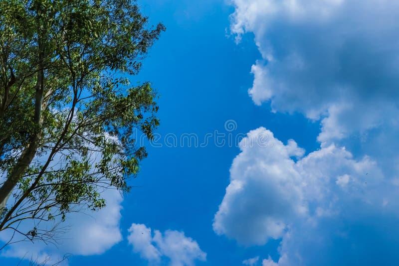 天空蔚蓝和云彩视图通过树 免版税库存图片
