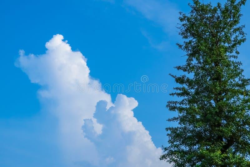 天空蔚蓝和白色云彩与树 免版税图库摄影