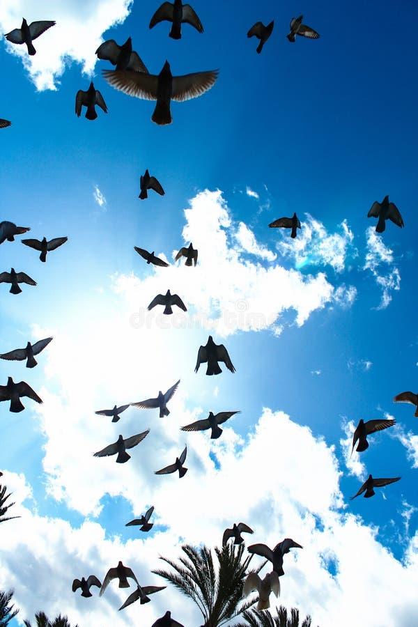 天空蔚蓝有很多鸟飞行 库存图片