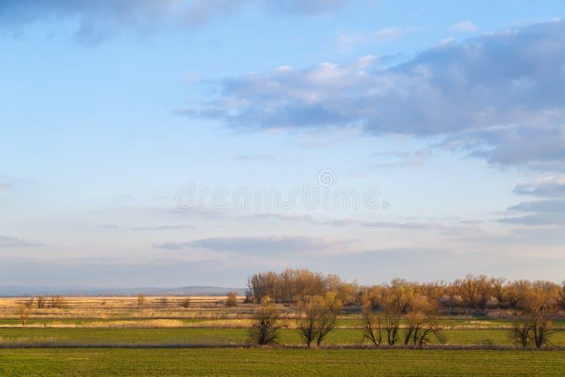 天空蔚蓝,绿色草甸,偶尔地长满与芦苇和比一般小的树作为背景或背景 免版税库存照片