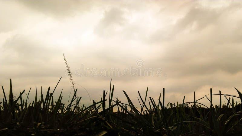 天空视图betore雨 免版税库存照片