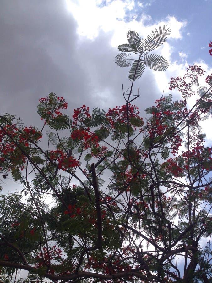 天空通过树 库存照片
