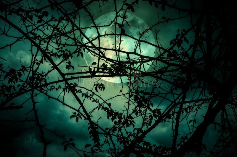 天空风景与超级月亮的在树枝后剪影  免版税库存照片