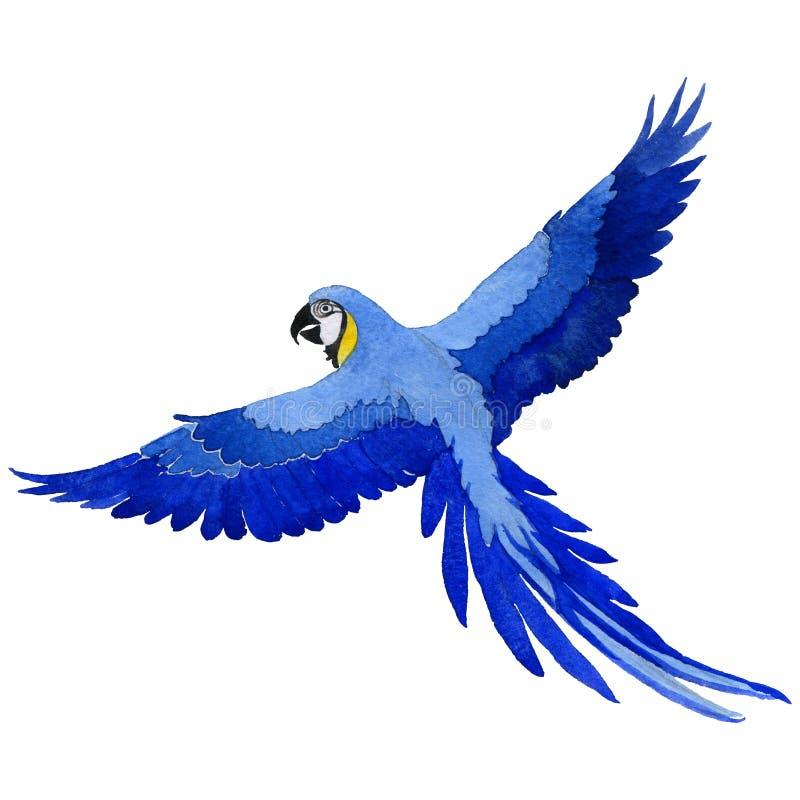 天空鸟在水彩样式被隔绝的野生生物的鹦鹉金刚鹦鹉 向量例证