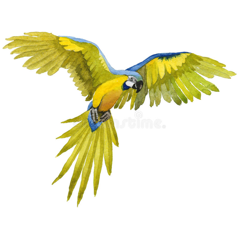 天空鸟在水彩样式被隔绝的野生生物的鹦鹉金刚鹦鹉 皇族释放例证