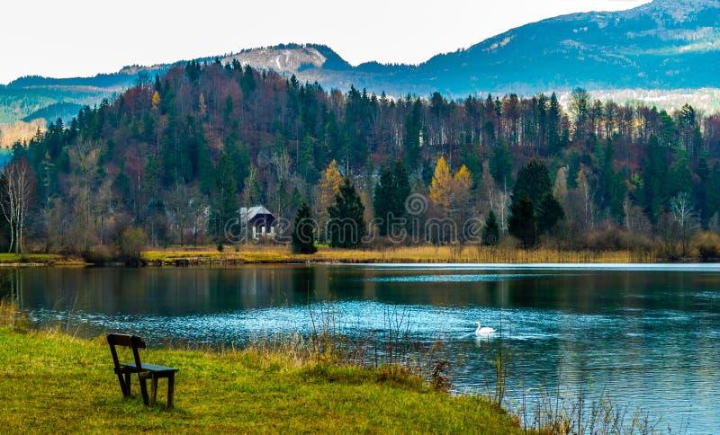 天鹅在一个美丽的湖游泳 在中部一条偏僻的长凳和一个偏僻的房子 免版税库存照片