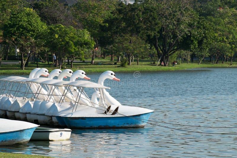 天鹅小船浮动周期、乐趣和松弛室外锻炼Serv 库存照片