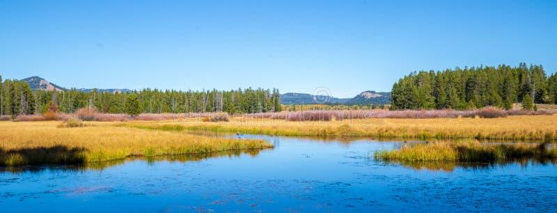 天鹅湖在大蒂顿国家公园 库存图片