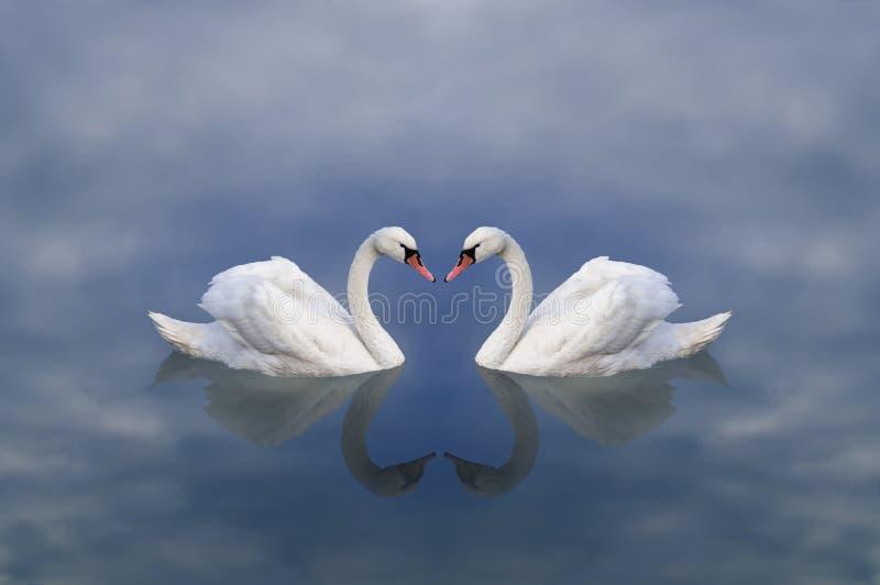 天鹅爱 天鹅爱  天鹅对在一个神圣多云湖 免版税库存图片