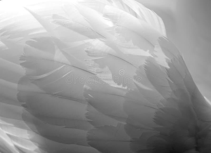 天鹅翼 库存图片