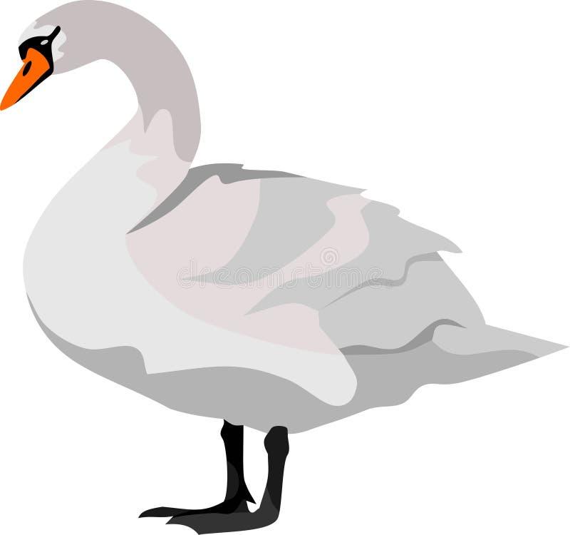 天鹅鸟 向量例证