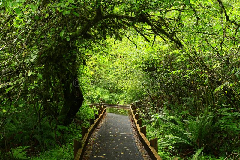 太平洋西北地区森林足迹 库存照片