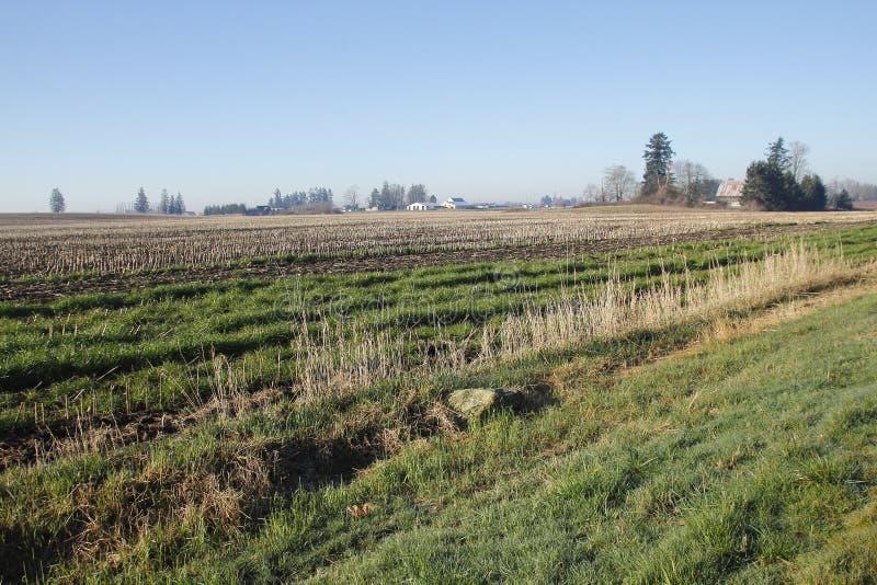 太平洋西北地区农业风景 免版税库存图片