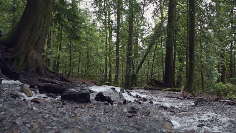 太平洋西北地区雨林冲的小河移动式摄影车射击 影视素材