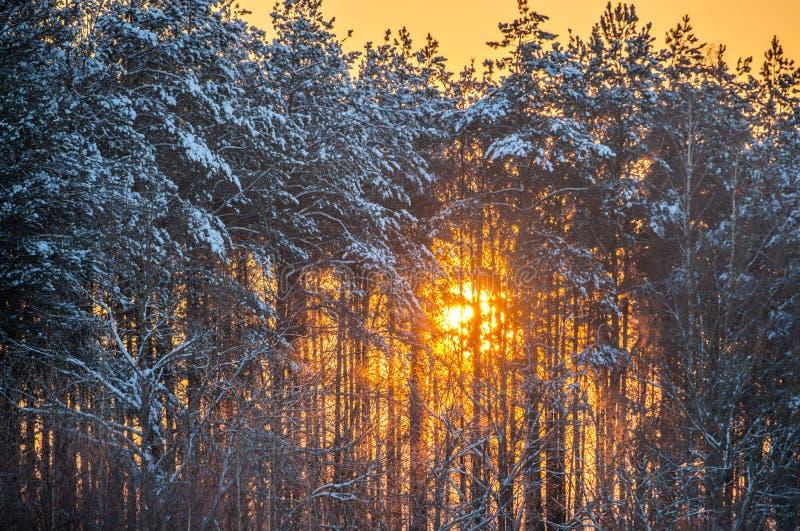 太阳亮光通过冬天树 库存图片