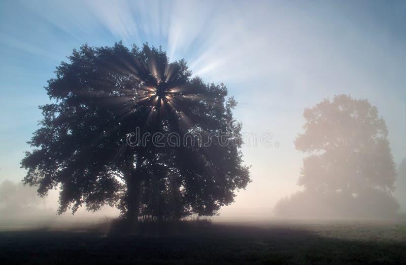 太阳光芒在有薄雾的早晨 库存照片