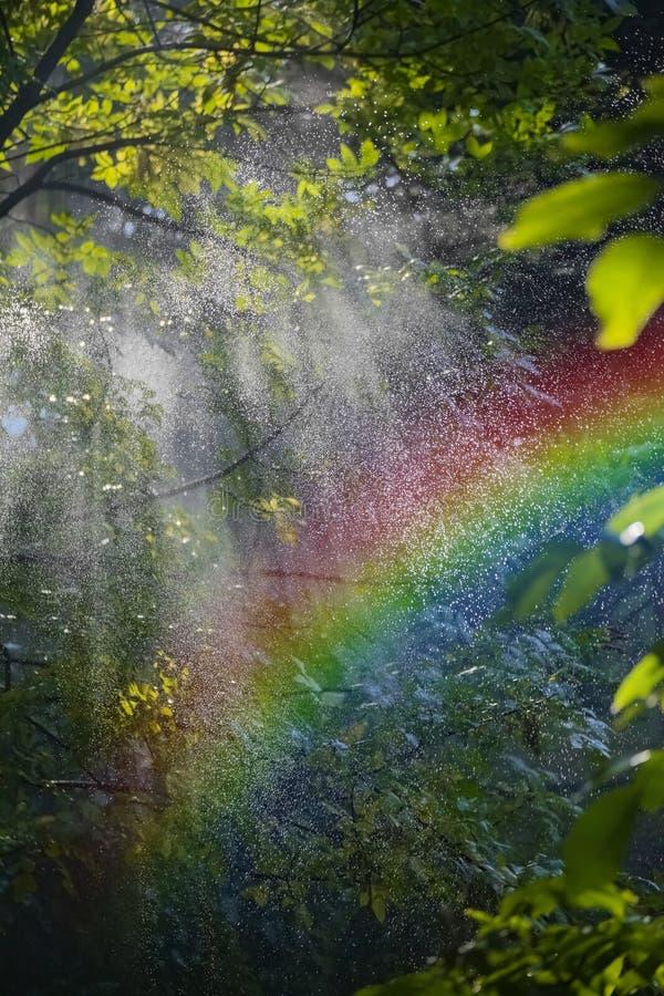 彩虹在森林里 免版税库存照片