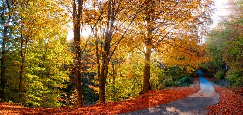 太阳光芒在森林里 免版税库存照片