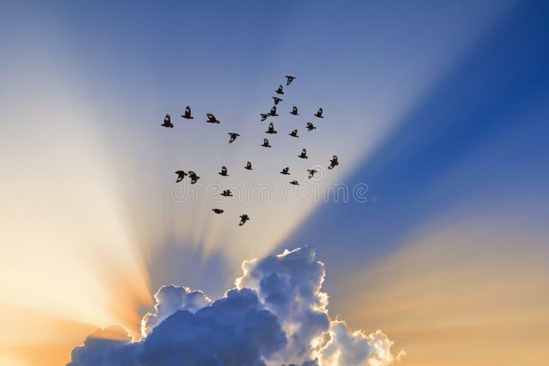 太阳光芒通过云彩来 免版税库存图片