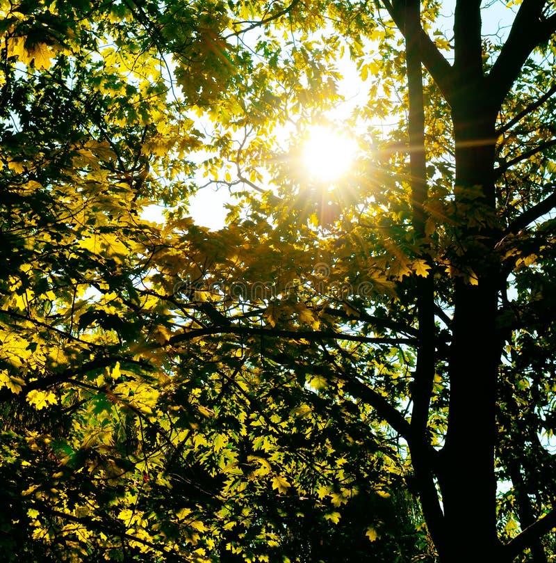 太阳光芒通过叶子和分支击穿 免版税库存图片