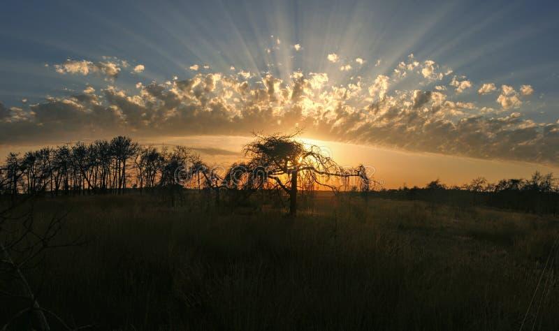太阳光芒通过在树剪影后的美妙地被塑造的云彩发光 免版税图库摄影