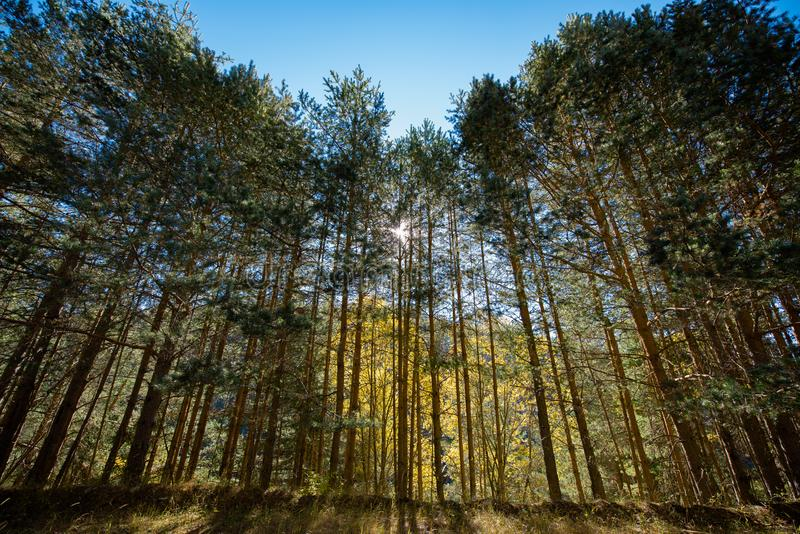 太阳光芒通过结构树 免版税库存照片