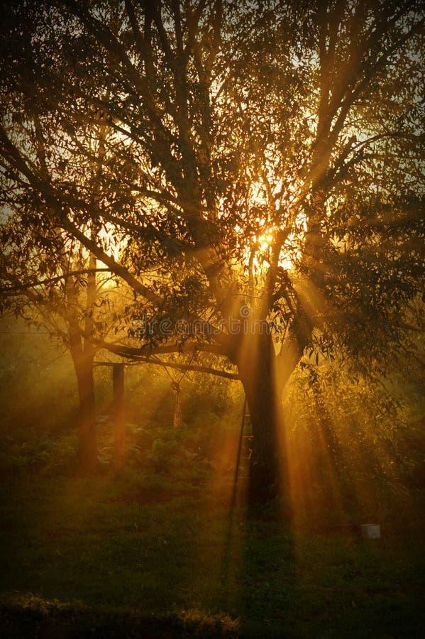 太阳光芒 库存图片
